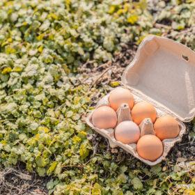砂谷コッコ村の平飼い有精卵